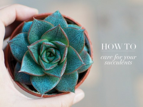 how-to-care-for-your-succulents5