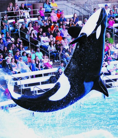 Less Tricks for Killer Whales at Sea World