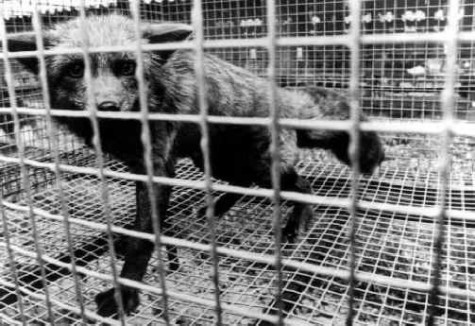 The Truth Behind the Fur Industry