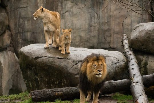 Should Zoo Animals Be Set Free?