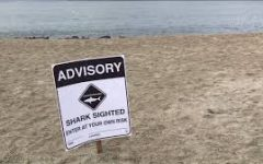 Shark Sightings in Long Beach and Attack in San Onofre Cause Shark Advisories