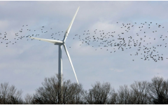 Are Sustainable Energy Sources Environmentally Friendly?