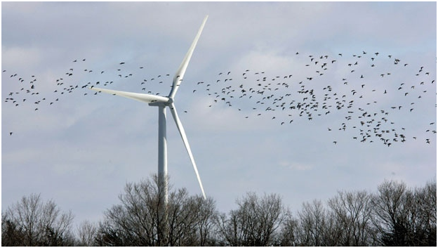 Wind Turbines killing birds.