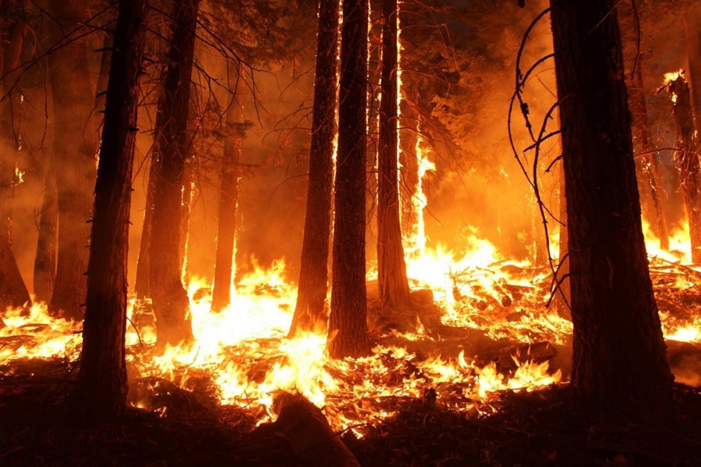 Amazon forest burning.