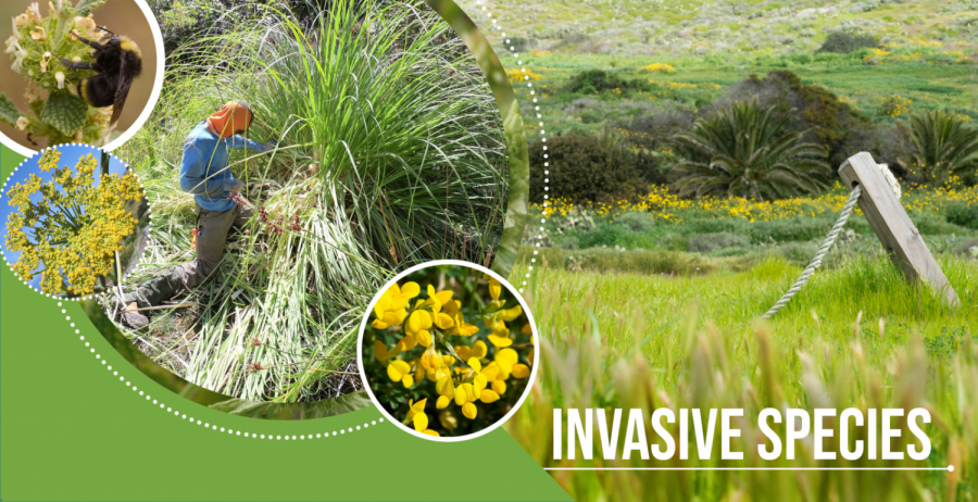 Invasive Species Disruptive to Native Ecosystem