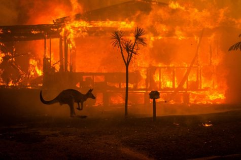 Australia Is Going Up In Flames!