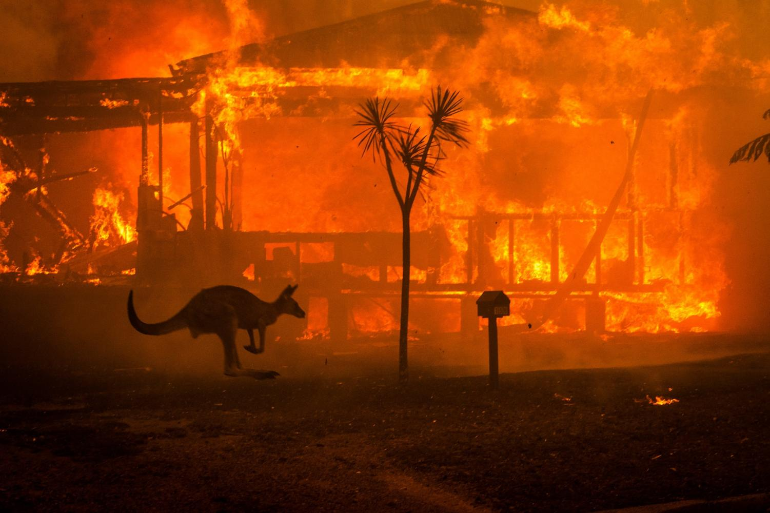 A kangaroo fleeing past a burning home in New South Wales, Australia. Photo taken during the day on New Year's Eve.